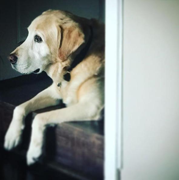perro de Aurelio Nuno 10