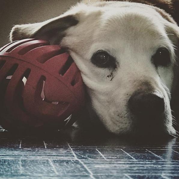 perro de Aurelio Nuno 12