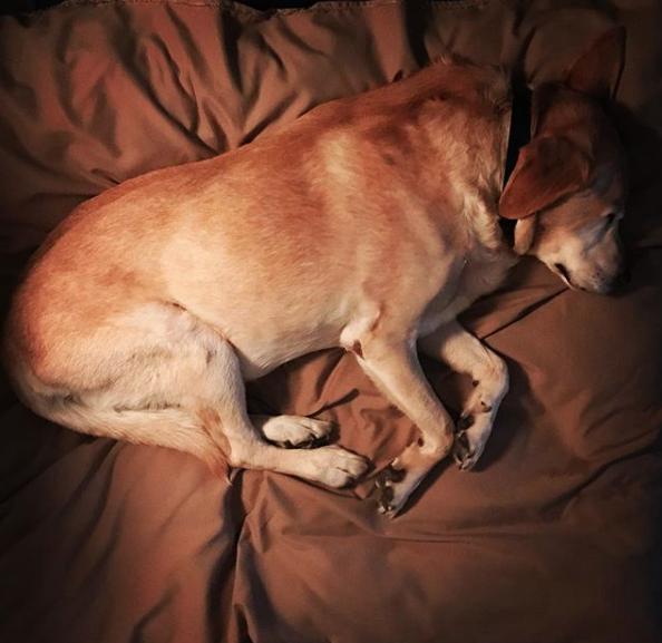 perro de Aurelio Nuno 14