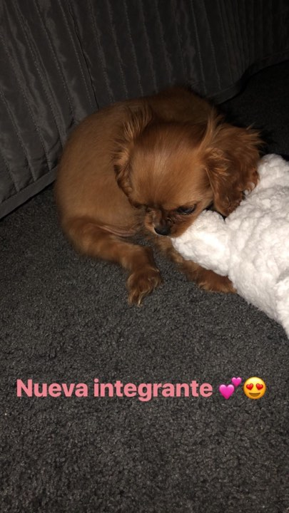 La perra de Sofia Castro 4