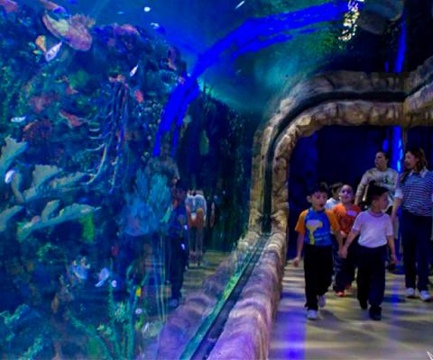 El nico acuario de la ciudad de m xico aqu s pasa mucho for Acuarios zona norte