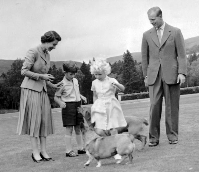 Perros reina Isabel 2