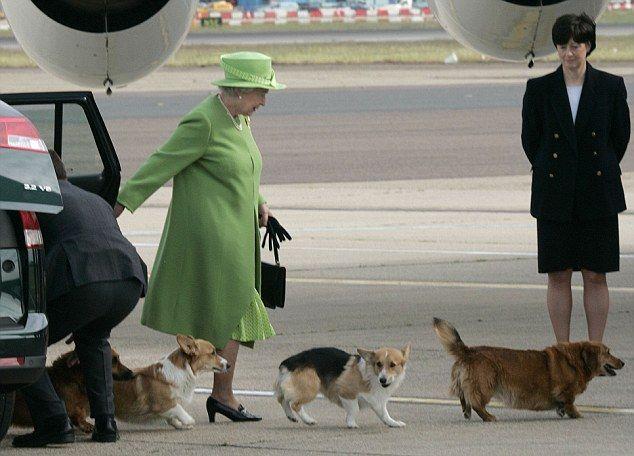 Perros reina Isabel 3