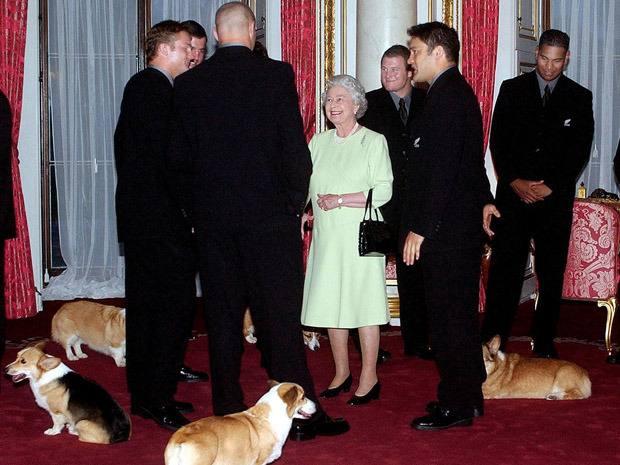 Perros reina Isabel 4