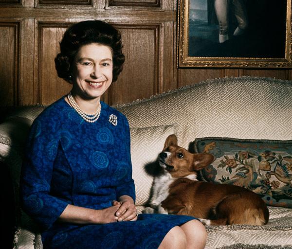 Perros reina Isabel 5
