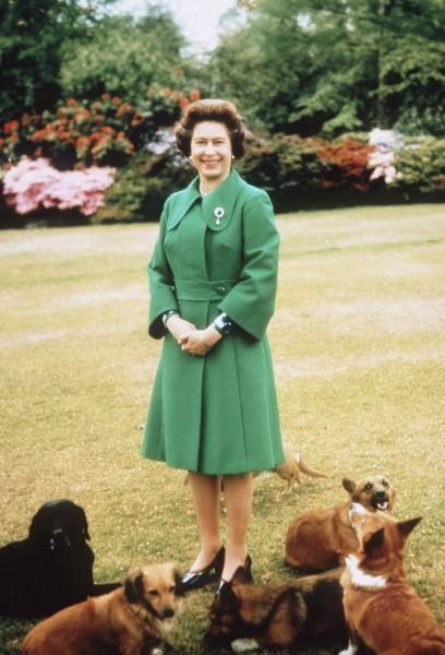 Perros reina Isabel 6