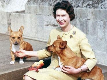 Perros reina Isabel 7