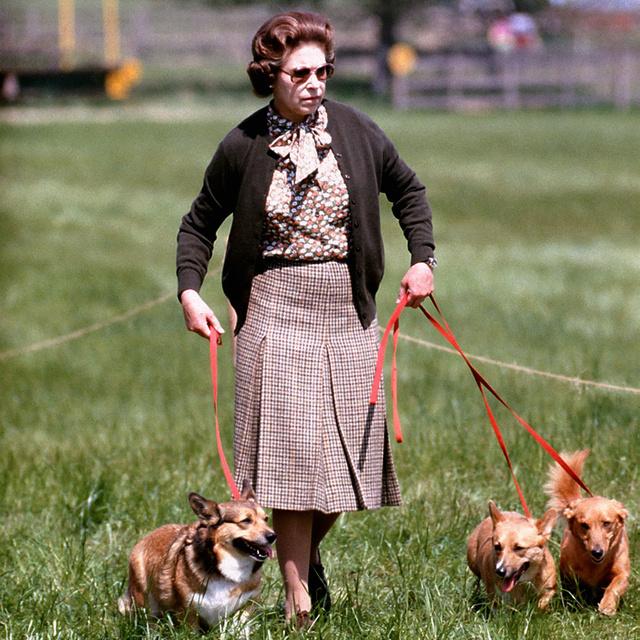 Perros reina Isabel 8