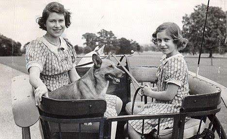 Perros reina Isabel 10