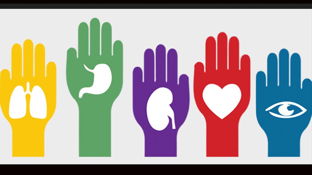 Senado aprueba la donación de órganos voluntaria y lícitamente